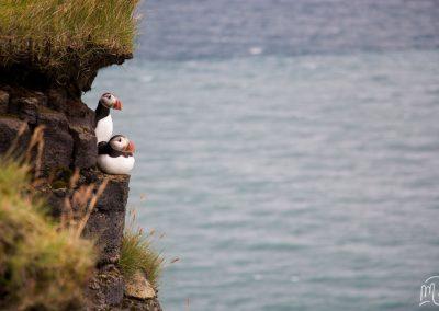 Carnet de voyage : Reportage photo en Iceland sur les oiseaux macareux, l'océan et les falaises. Photographe freelance en Gironde, Bordeaux.